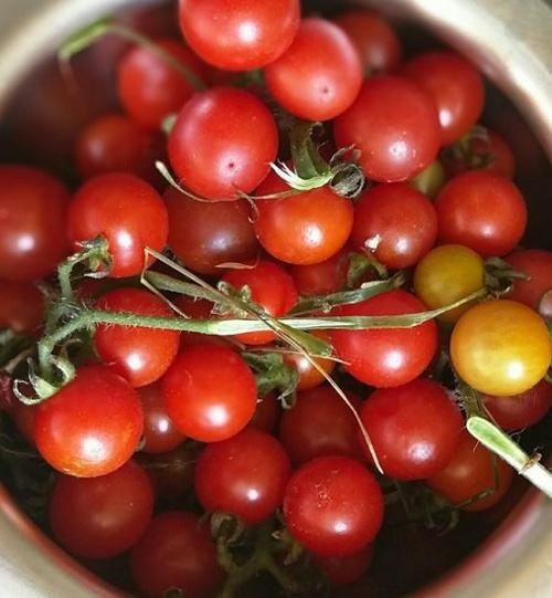 ミニトマトはサラダ以外でも楽しめる!簡単美味しいミニトマトのおかずレシピ