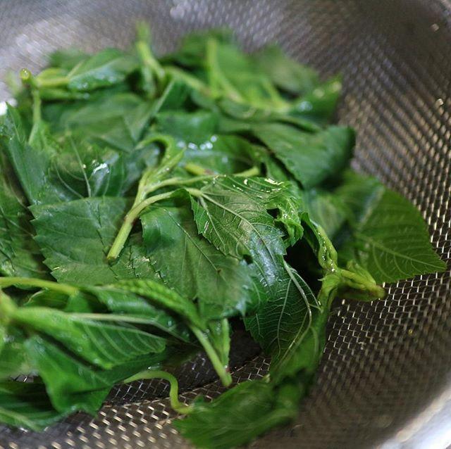 モロヘイヤってどんな野菜?健康にも美容にも良いモロヘイヤの簡単レシピ