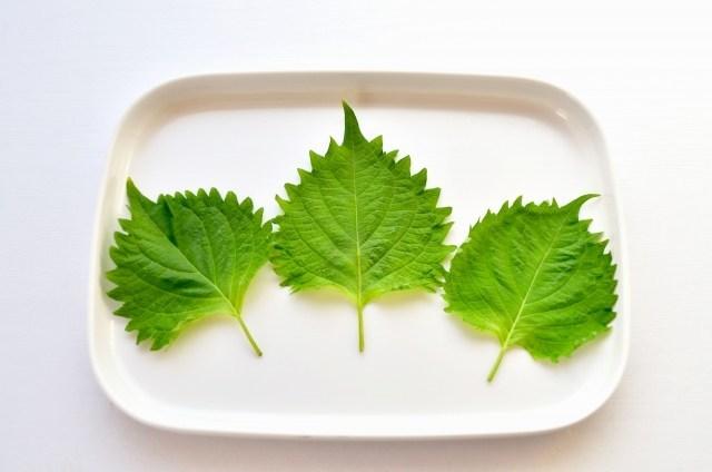 大葉を使ってさっぱりと。大葉を余らさずに使いきる大葉の調味料とおかずのレシピ