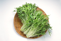 お鍋には欠かせない!水菜の保存方法や使い入りレシピ!