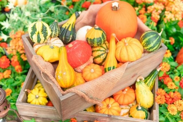 ハロウィンでおなじみ♪ オレンジ色のかぼちゃの豆知識