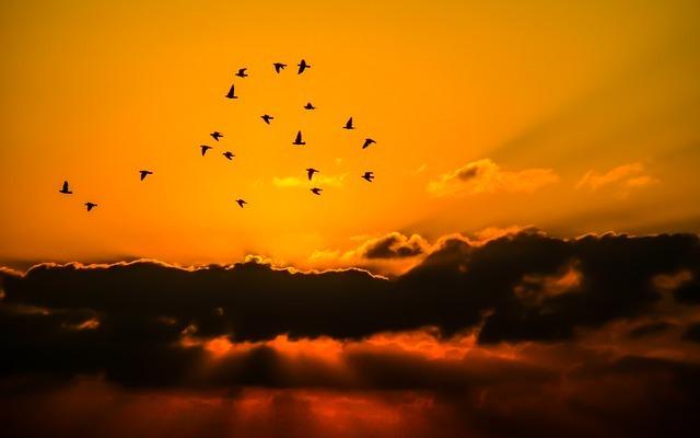 元気印のイメージを持つ『オレンジ色』!!上手に生活に取り入れ活力UP✤