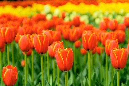 オレンジ色は2018年のラッキーカラーの一つです☆オレンジ色を取り入れて幸運を引き寄せてみませんか!