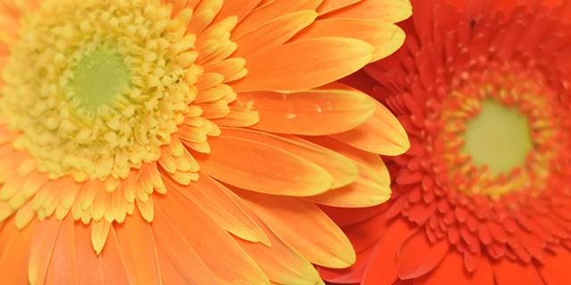 オレンジ色の花たち✿太陽のようなイメージを持つオレンジ色の花✿花言葉を添えて!