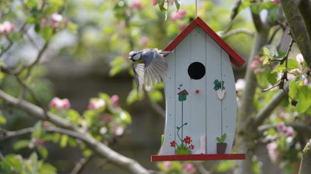バードハウスやバードフィーダーで庭やベランダに小鳥たちを呼ぼう!