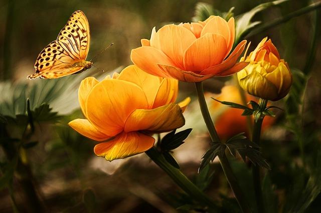 気分を上げてくれるオレンジ色の花の種類は?