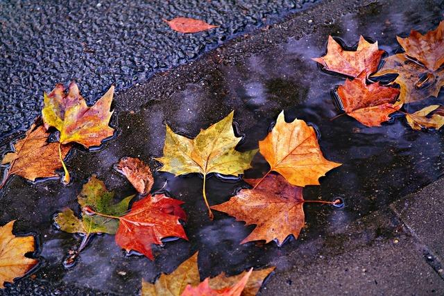落ち葉や木の実を拾ったら作ってみよう♪工作アイデアと保存のヒント