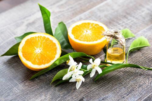 果実のオレンジの花言葉を知っていますか? オレンジの花の花言葉はすごく素敵♪