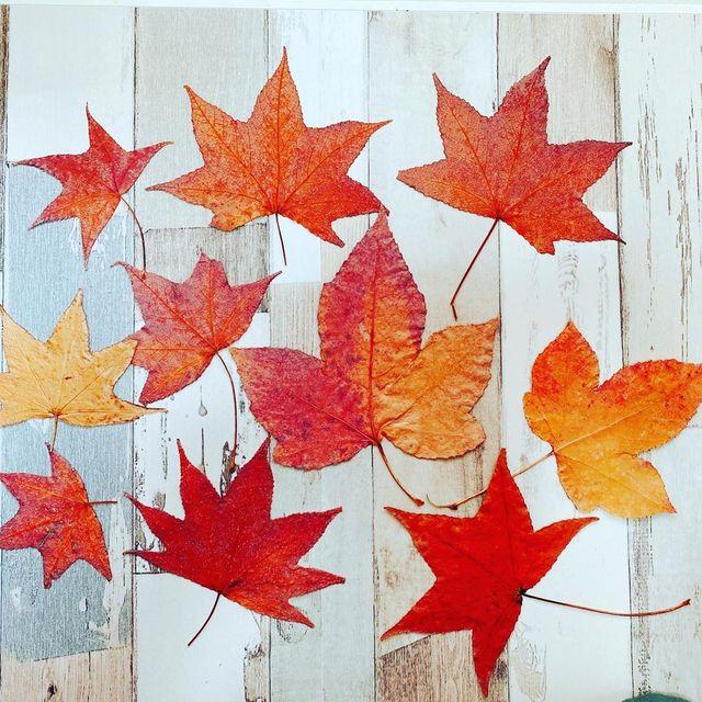 キレイな落ち葉で子どもと簡単工作をしてみよう♫幼児から低学年にオススメ