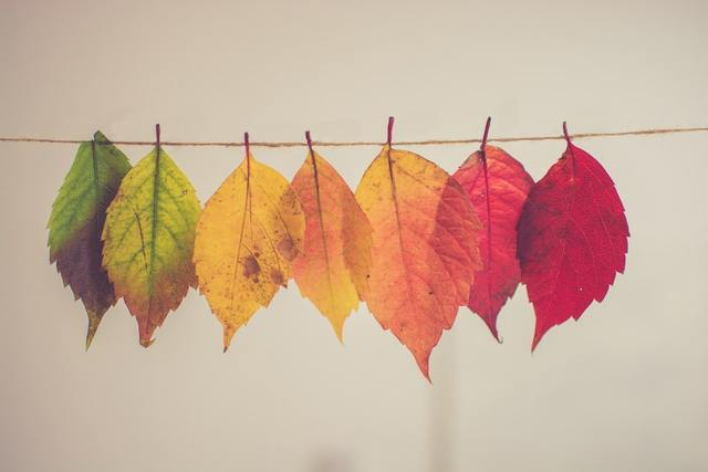 assorted-color lear hanging decor photo – Free Fall Image on Unsplash