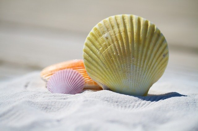 海で拾った貝殻で工作してみよう!貝殻は100均でも売っているよ♡