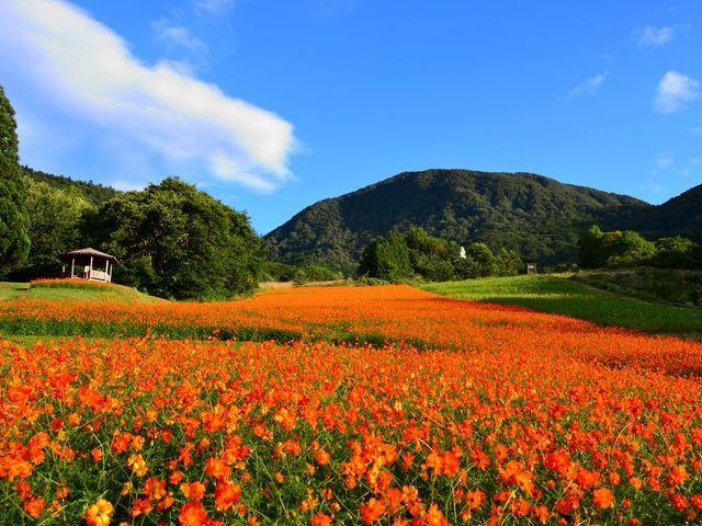まるで絨毯のよう!オレンジカラーの花がいっぱいな日本の絶景スポット11選