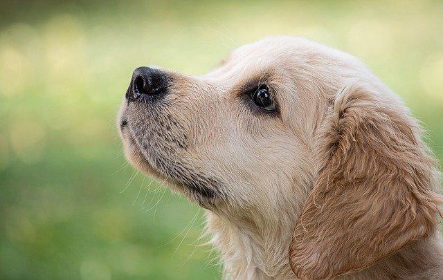 愛犬の健康のために!無添加で安全安心のドッグフード