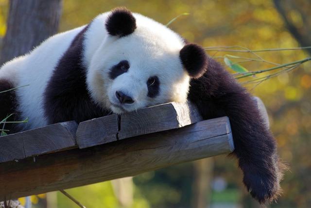 上野の双子パンダ名前決定記念!身近なものや100均購入品でパンダ工作♪